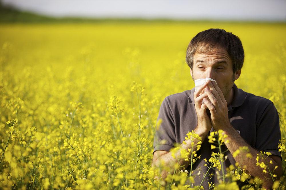 Аллергический вазомоторный ринит